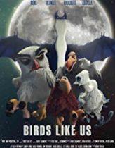 Kuşlar Bizim Gibi